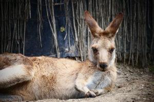 オーストラリアのワーホリビザ申請費用